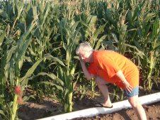 Listening to the Corn Grow in Nebraska